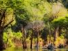 Canoeing Anavilhanas