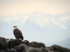 Eagle And Olympic Mountains