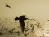 Seabird Silhouettes.